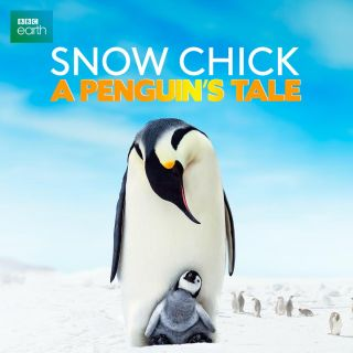 Snow Chick: A Penguin's Tale w Showmax